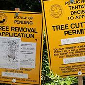 Tree Removal Permits 1