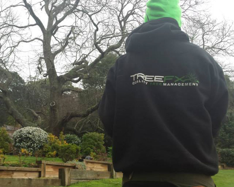 Arboricultural Consultancy 2