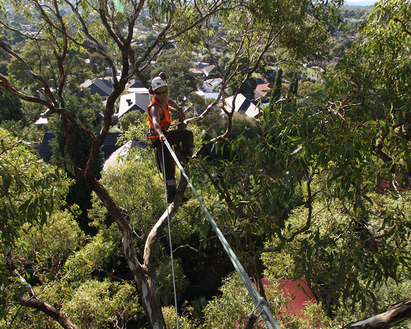Tree Hazard Assessments and Risk Management Strategies 1